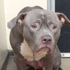Lo sguardo del cane che capisce di essere stato abbandonato
