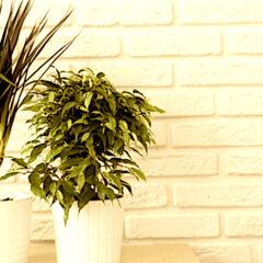 Le 7 insospettabili piante killer che non dovremmo mai tenere in casa